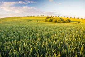 Dækafgrøder har mange formål, for økologer, mod ukrudt og flere andre ting.